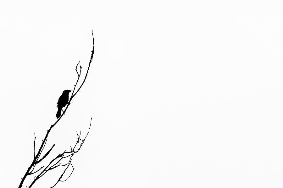 Bird Silhouettes 2 Photograph