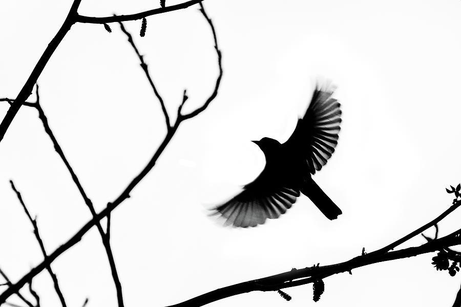 Bird Silhouettes 4 Photograph