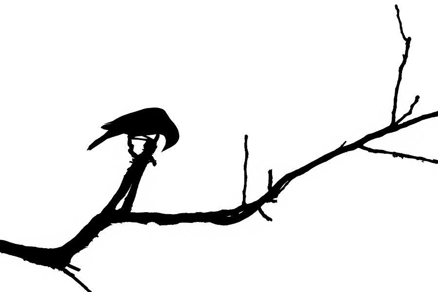 Bird Silhouettes 5 Photograph