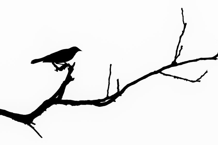 Bird Silhouettes 6 Photograph