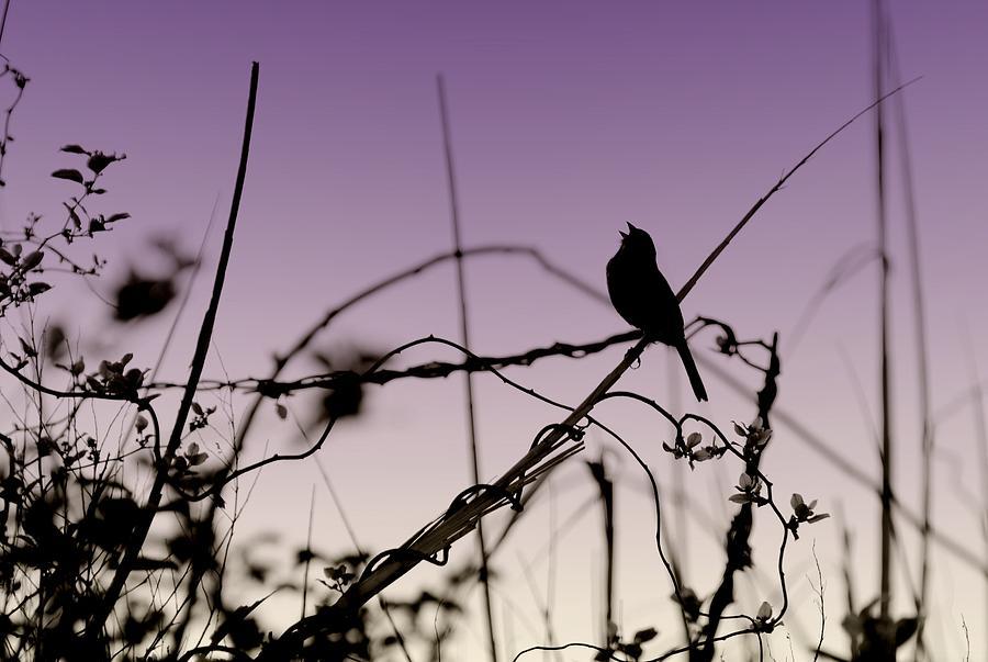 Silhouette Photograph - Bird Sings by Angie Tirado