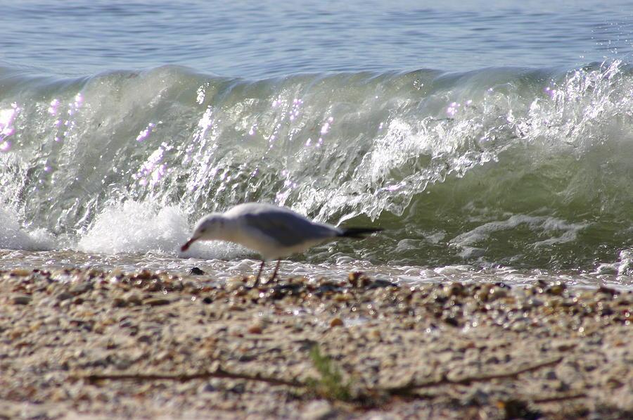 Seagul Photograph - Bird Splash by Matthew Kennedy
