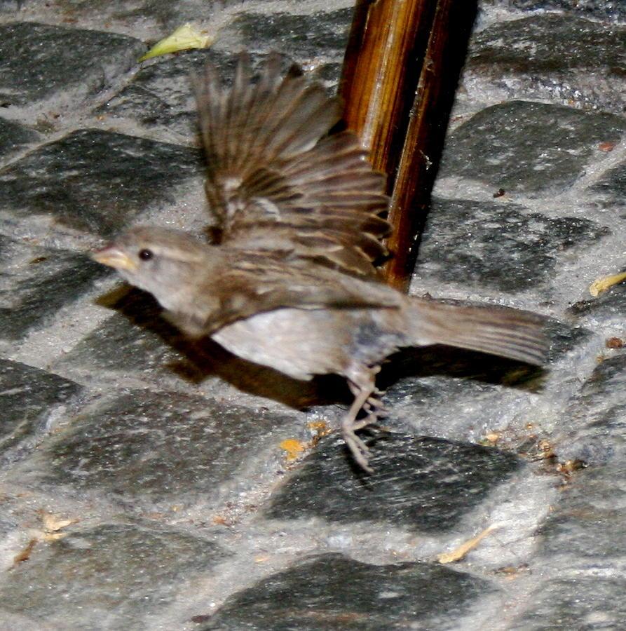 Bird Photograph - Bird Taking Flight by Sara Summers