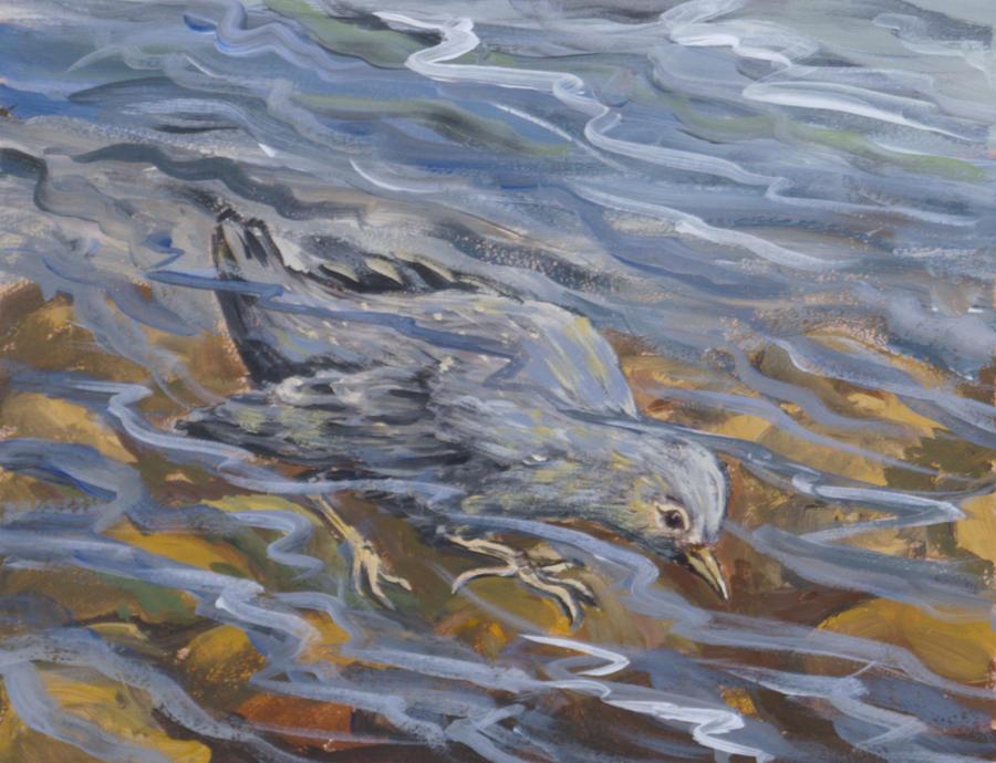 Animal Painting - Bird Underwater by Dawn Senior-Trask