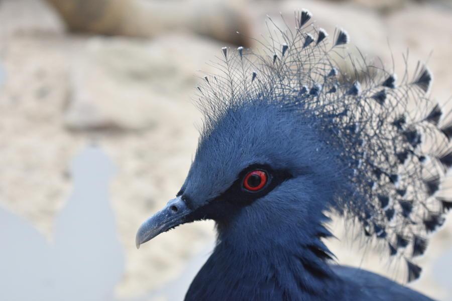 Cock Photograph - Bird by Utpal Datta
