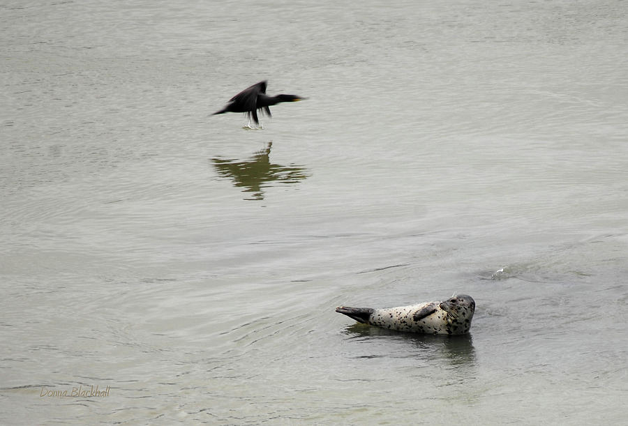 Seal Photograph - Bird Watching by Donna Blackhall