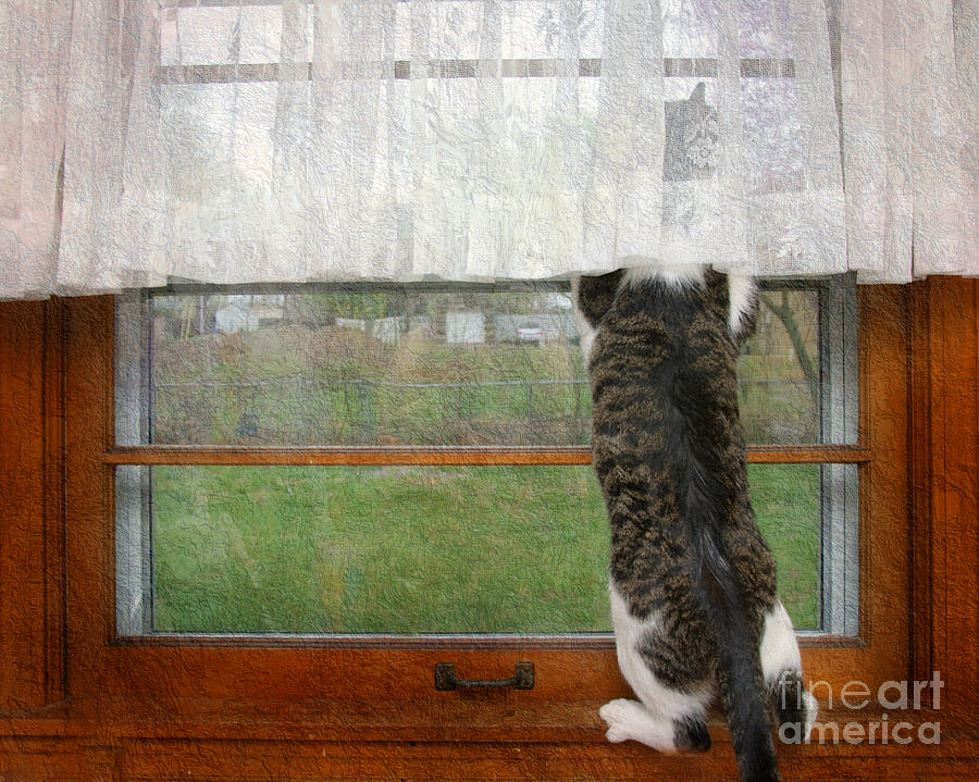 Bird Watching Photograph - Bird Watching Kitty Cat by Andee Design