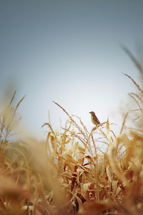Bird Photograph - Bird by Zoltan Toth