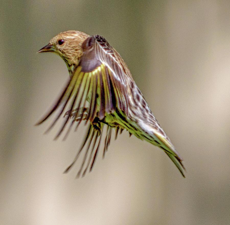 Bird2 Photograph by Craig Applegarth