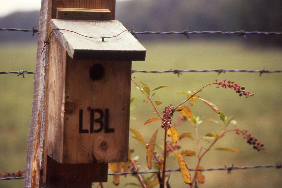 Tennessee Photograph - Birdhouse - 1 by Randy Muir