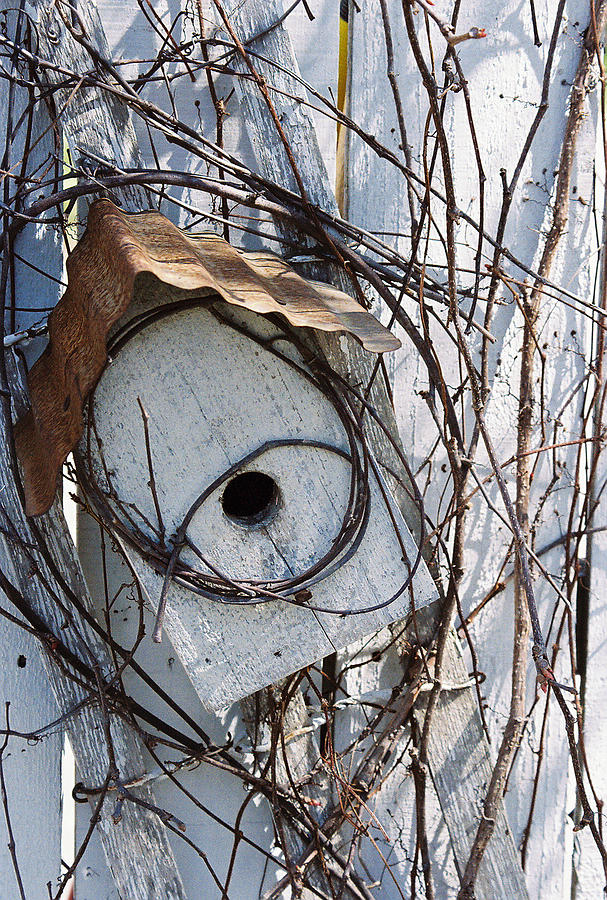 Birdhouse Photograph - Birdhouse Brambles by Lauri Novak