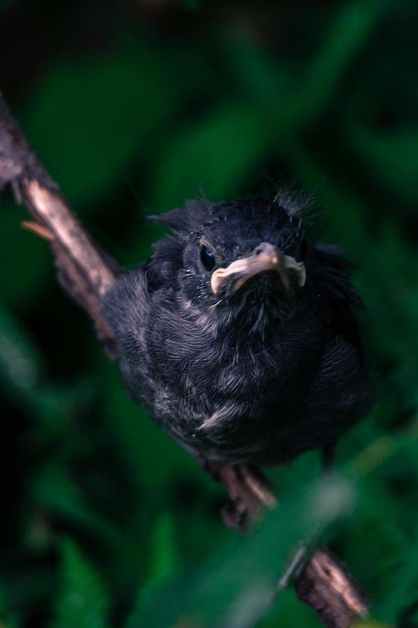 Birdie Photograph
