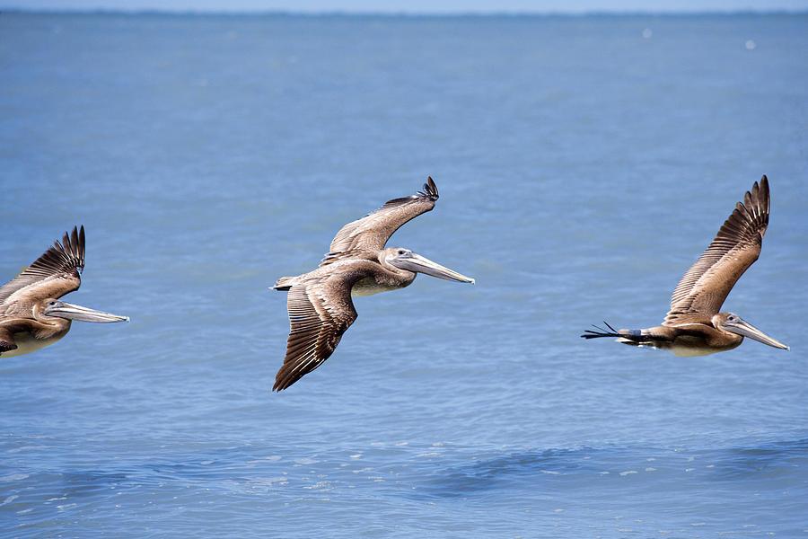 Birds 1039 by Michael Fryd