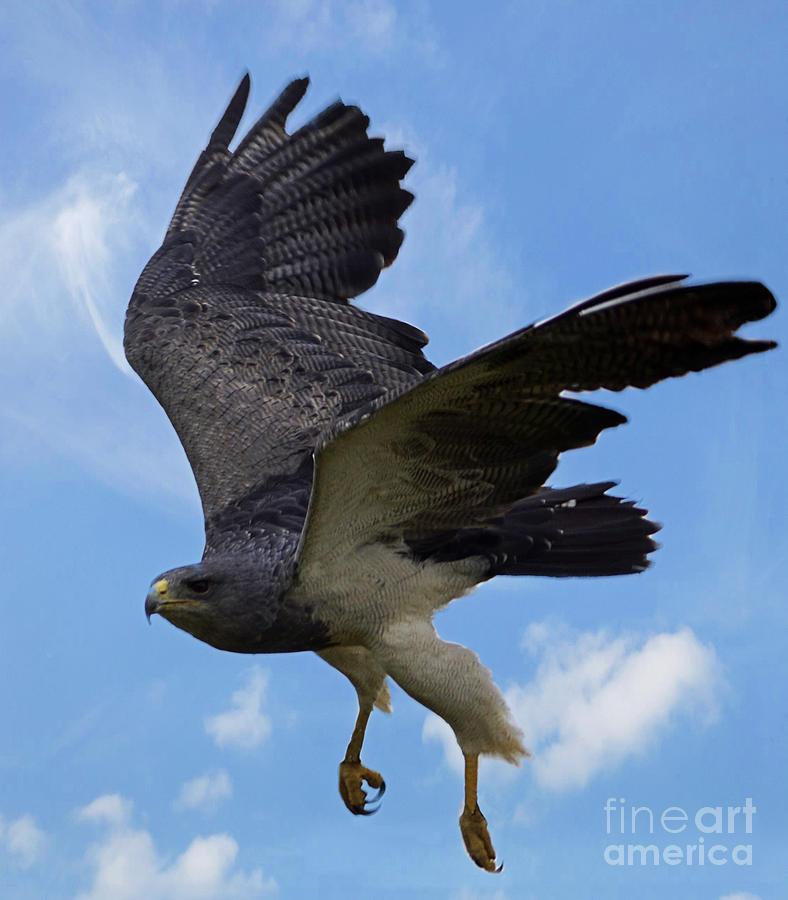 Birds Photograph - Birds 49 by Ben Yassa
