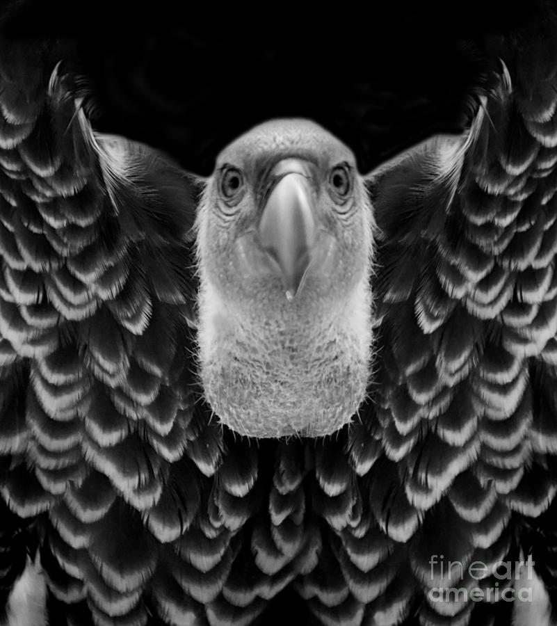 Birds Photograph - Birds 50 by Ben Yassa
