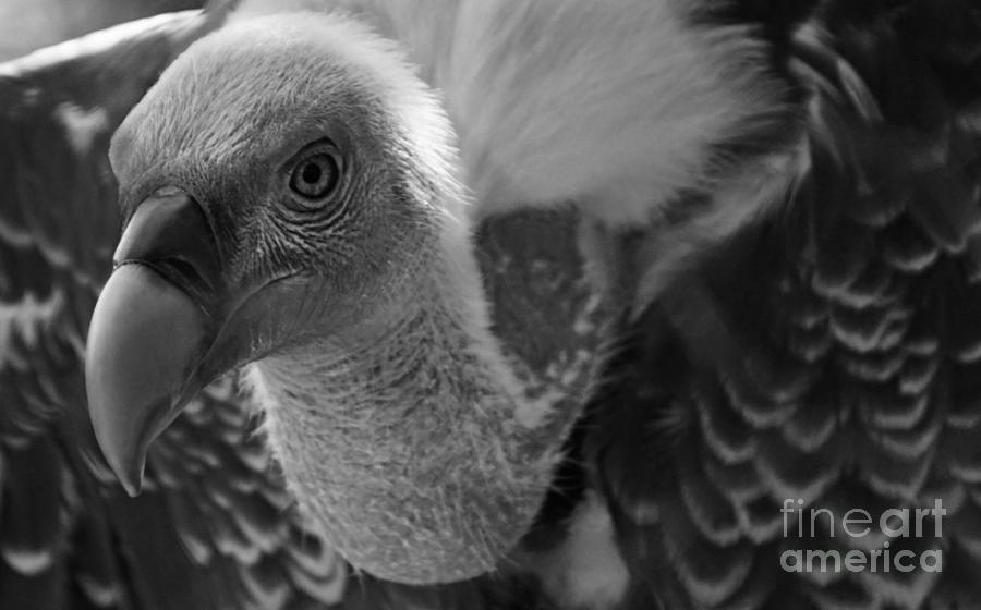 Birds Photograph - Birds 51 by Ben Yassa
