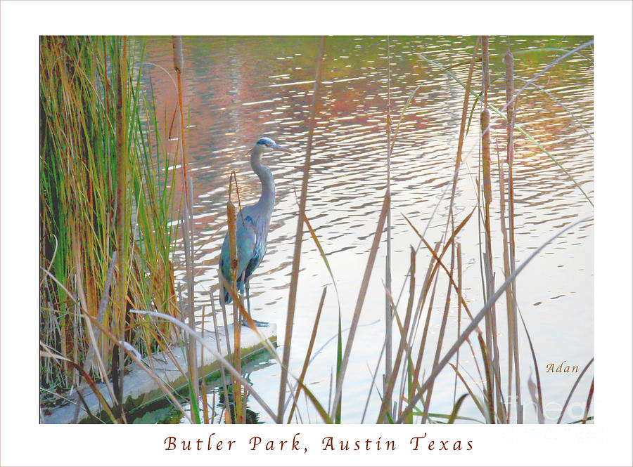 Birds Photograph - Birds And Fun At Butler Park Austin - Birds 4 Poster Greeting Card by Felipe Adan Lerma