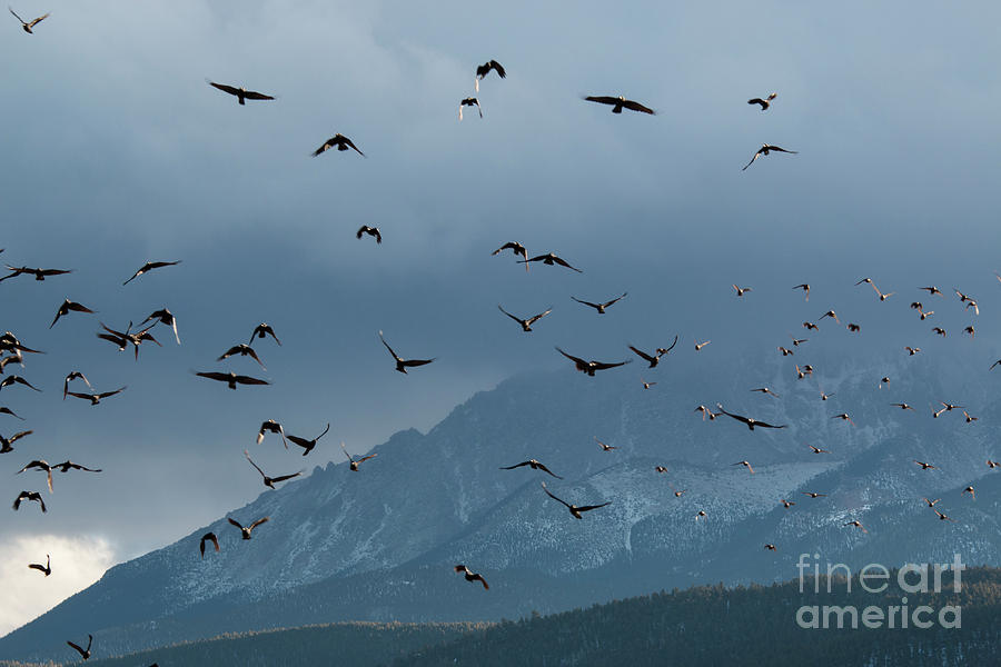 Birds And Storm Clouds On Pikes Peak Photograph
