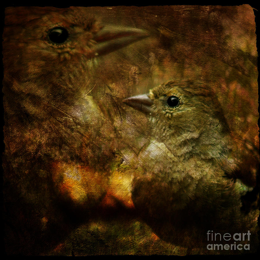 Sparrow Photograph - Birds by Angel Ciesniarska