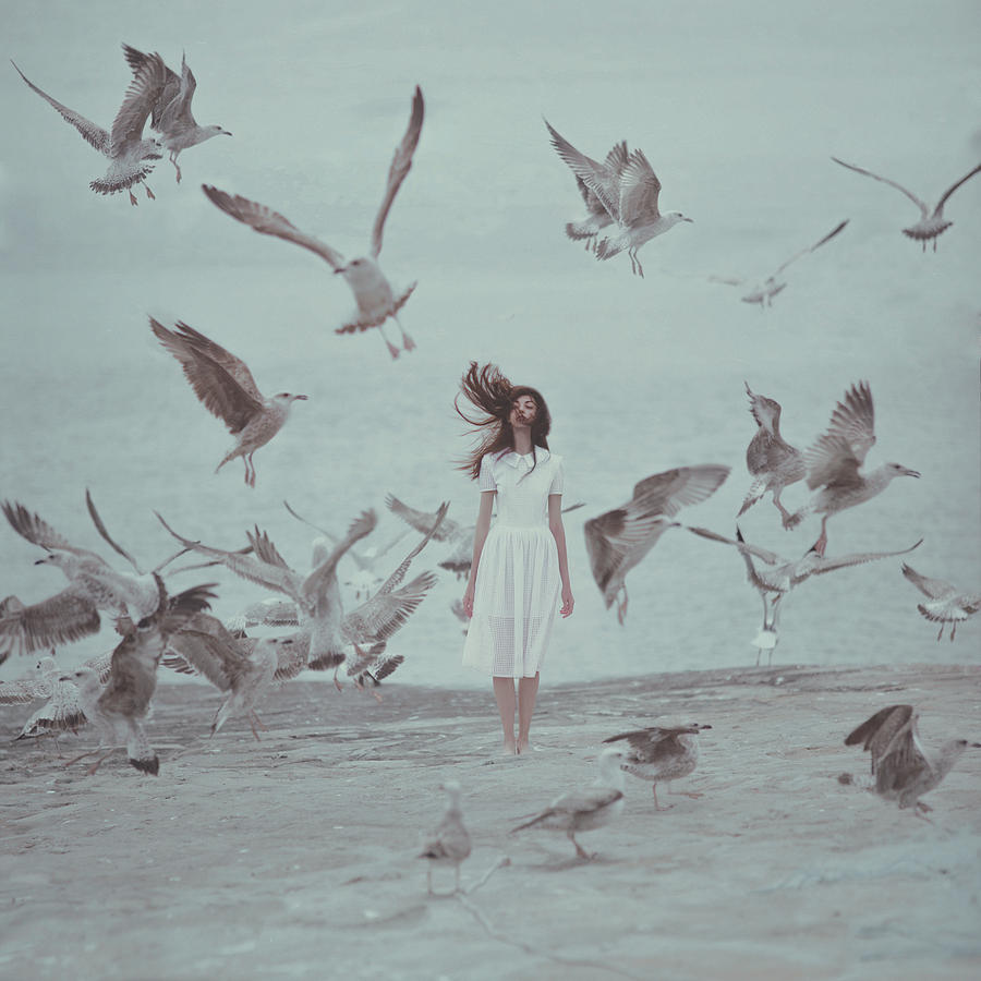 Birds Photograph by Anka Zhuravleva