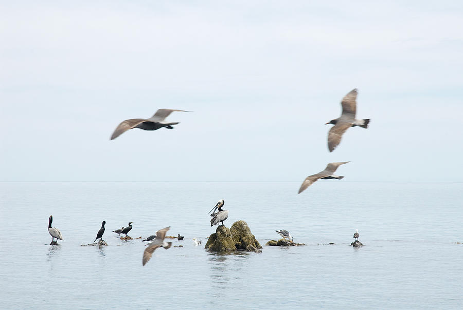 Seagull Photograph - Birds by Elisa Locci