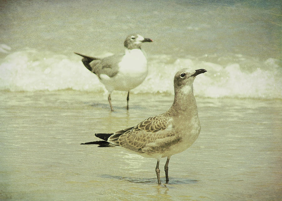 Seagull Photograph - Seabirds View by JAMART Photography