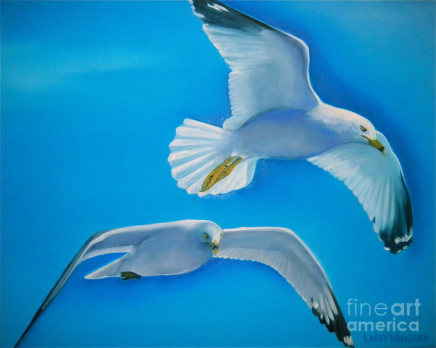 Seagull Painting - Birds Eye View by Lacey Wingard