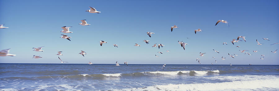 Color Image Photograph - Birds Flying Over The Sea, Flagler by Panoramic Images