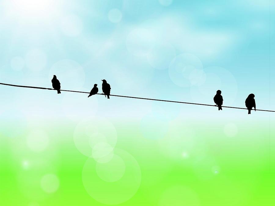 Birds Photograph - Birds Hanging Around by Andrea Kollo