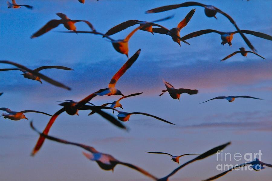Birds In Flight #1 by Ronald Rockman