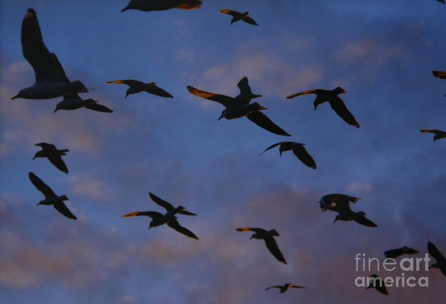 Birds In Flight  #2 by Ronald Rockman