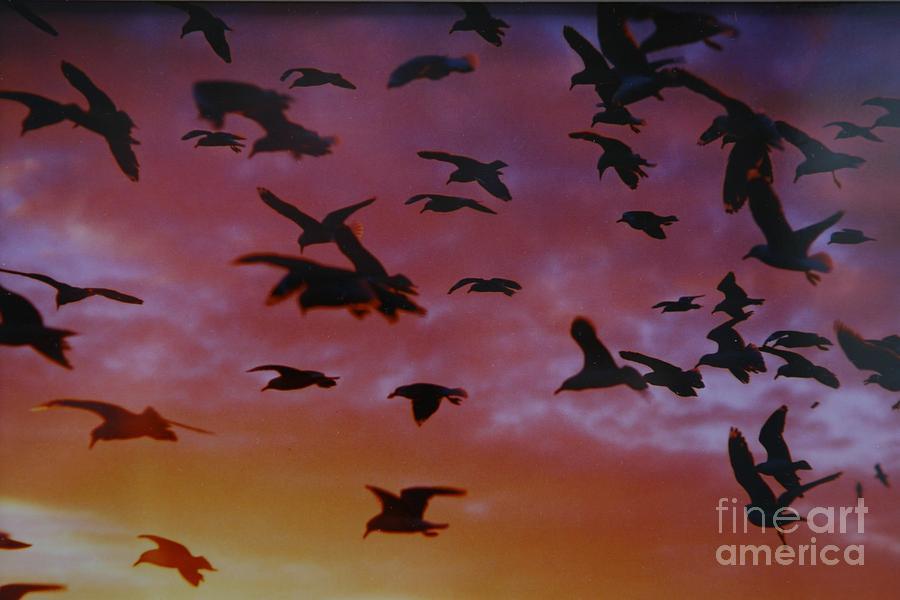 Birds In Flight  #3 by Ronald Rockman