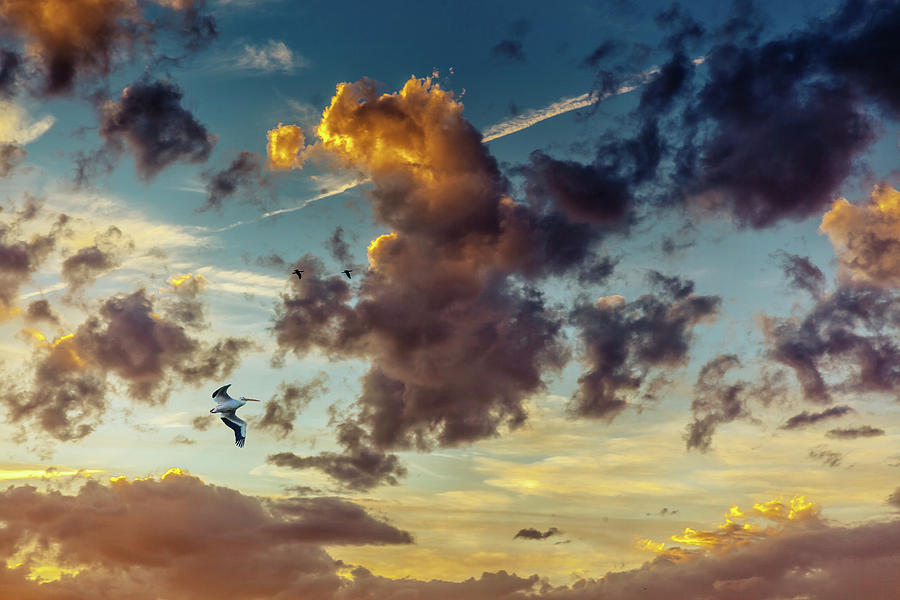Birds in Flight at Sunset by Janice Bennett