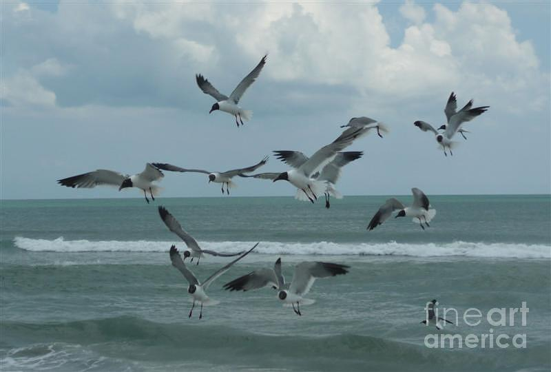 Birds Photograph - Birds In Flight by Barb Montanye Meseroll