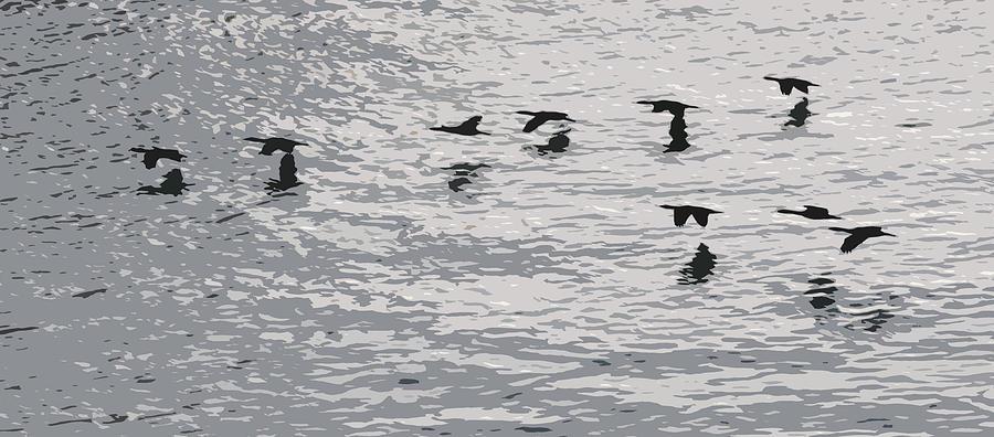 Birds Photograph - Birds In Flight. by Robert Rodda