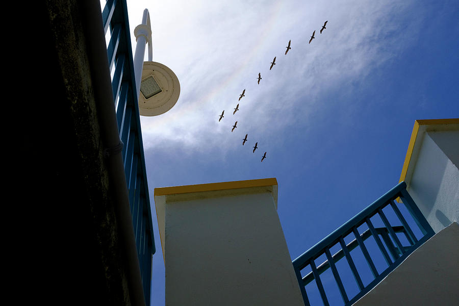 Birds In Formation Over The Boardwalk At Daytona Beach Florida by John McLenaghan