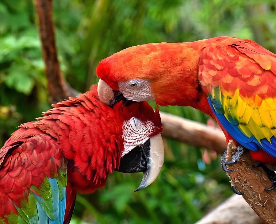Birds Photograph - Birds In Love by Johanne Daniel
