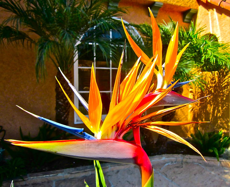 Photograph Of Bird Of Paradise Photograph - Birds In Paradise by Gwyn Newcombe