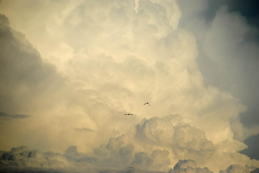Clouds Photograph - Birds In The Clouds by Vallee Johnson