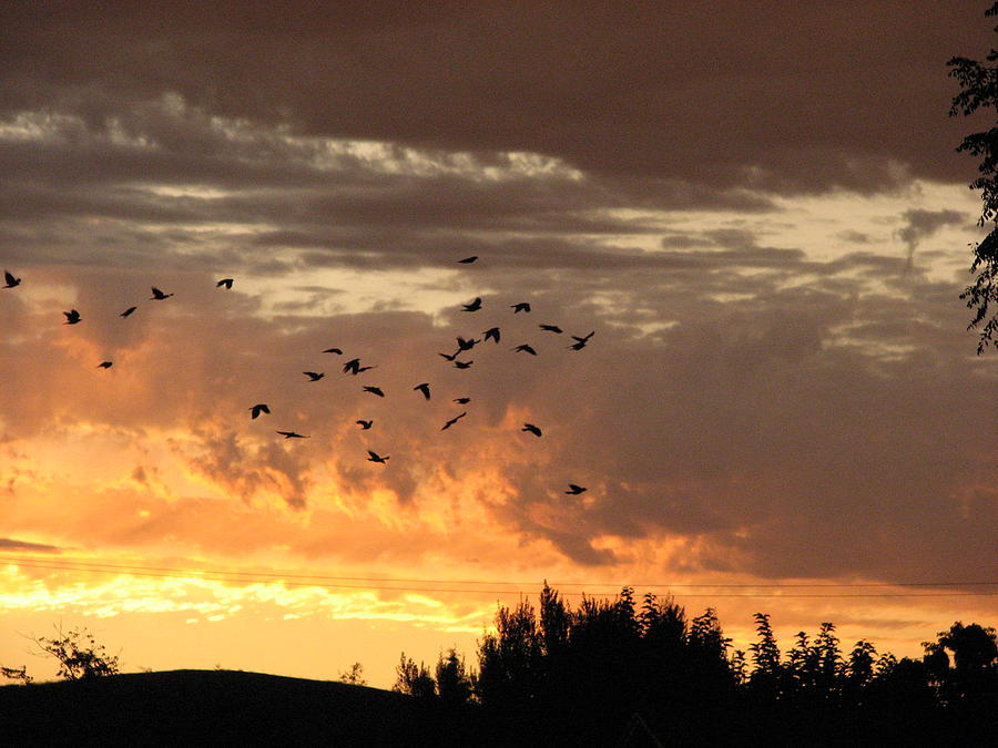Birds Photograph - Birds In The Sky by Kathy Roncarati