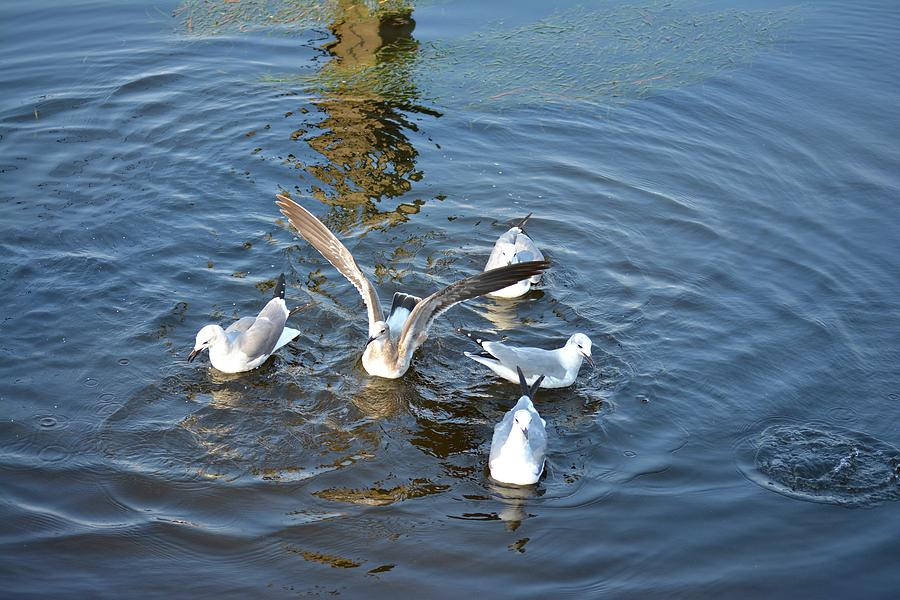 Seagulls Photograph - Birds Of A Feather Flock Together by Tamra Lockard