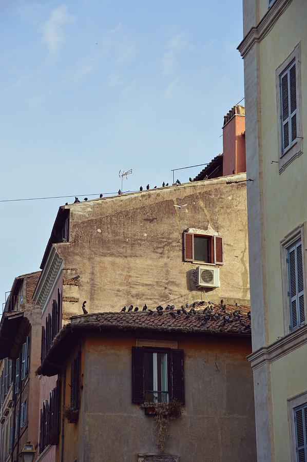 Italy Photograph - Birds Of A Feather by JAMART Photography