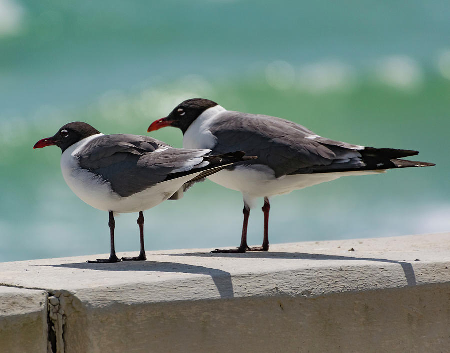 Seagulls Photograph - Birds Of A Feather by Anthony Lauby