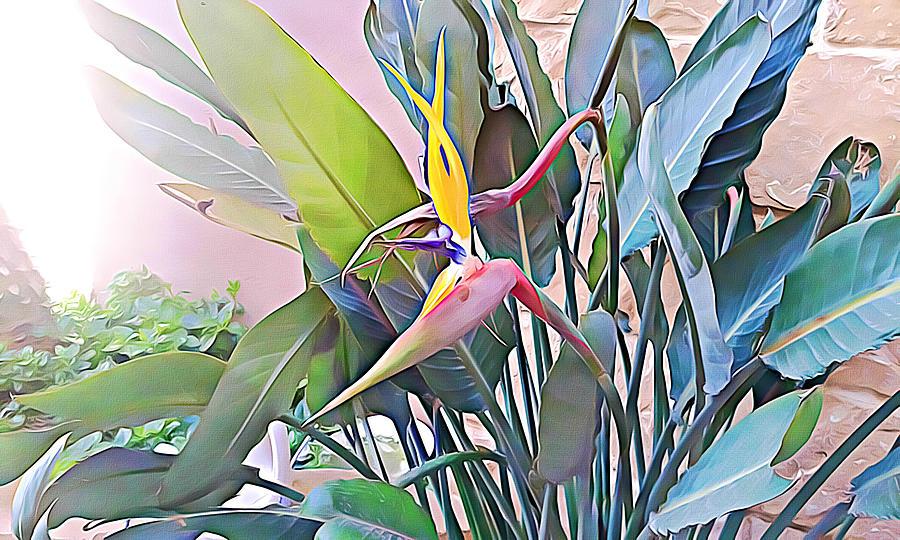 Birds of paradise  by Lucia Sirna