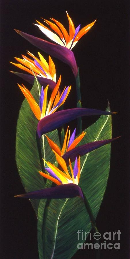 Floral Painting - Birds Of Paradise by Mary Erbert