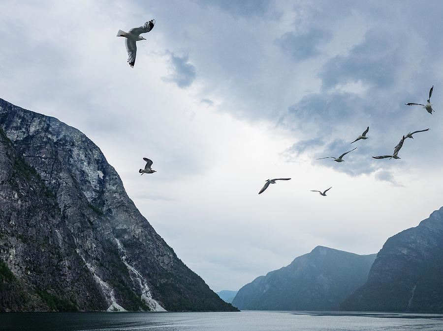 Birds Photograph - Birds of the Fjords of Norway by Whitney Leigh Carlson