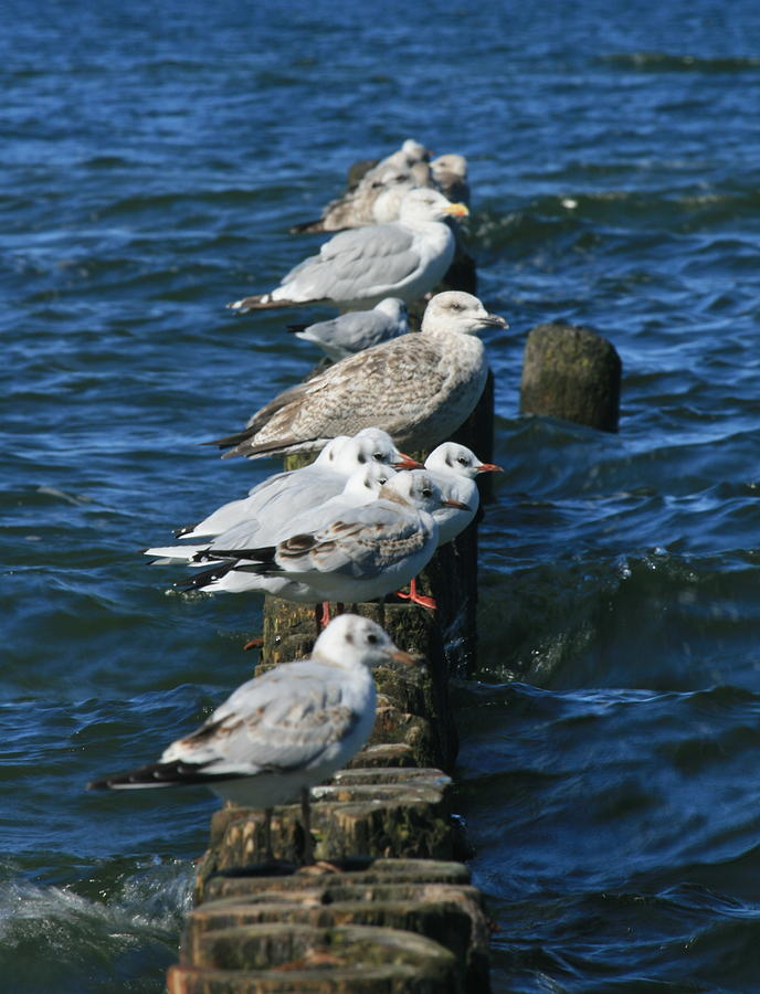 Birds Photograph - Birds Of The Sea by Marta Grabska
