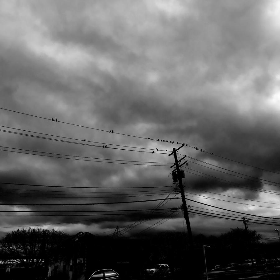 Birds On A Wire 2018 Photograph by Chris Montcalmo