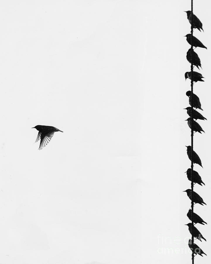 Bird Photograph - Birds On A Wire by Jim Wright