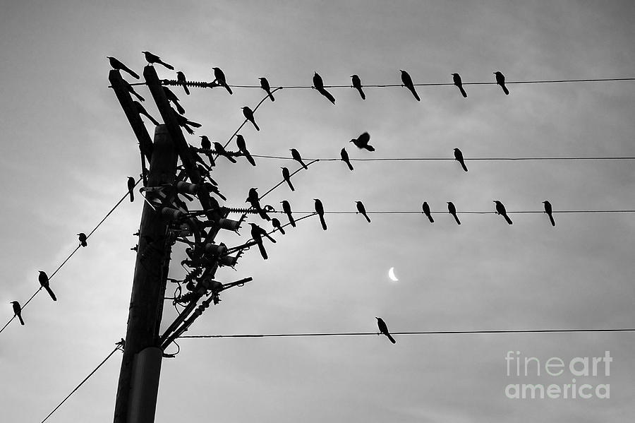 Birds On A Wire Photograph by Lionel Martinez